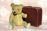 Bear traveller