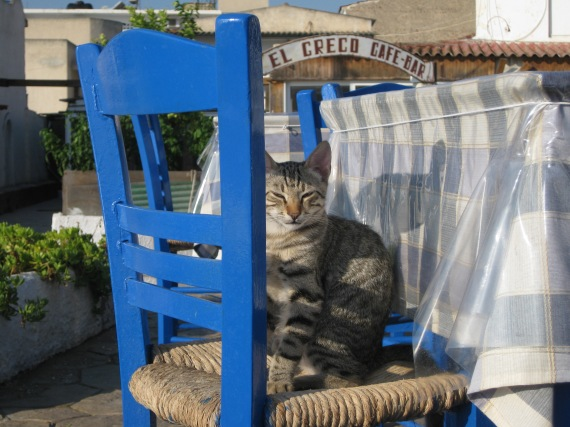 Aegina, cat in Agia Marina