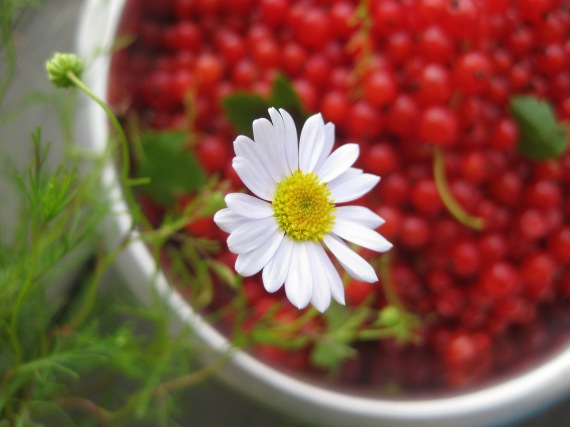red currants and flowers