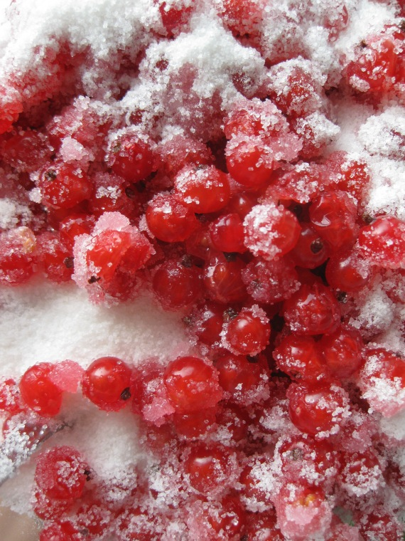 red currants with sugar