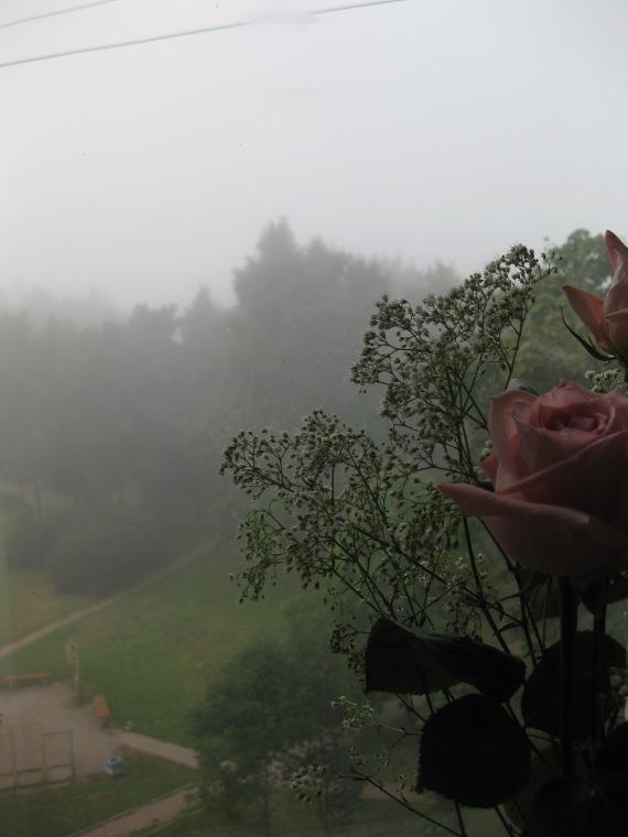 brouiilard et roses