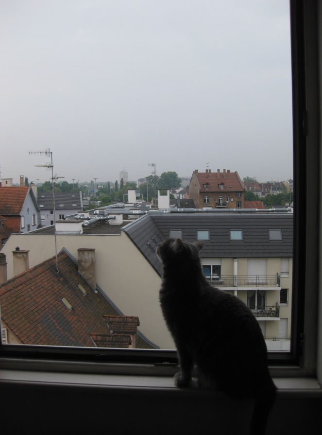 Gavrilis and Strasbourg rooftops