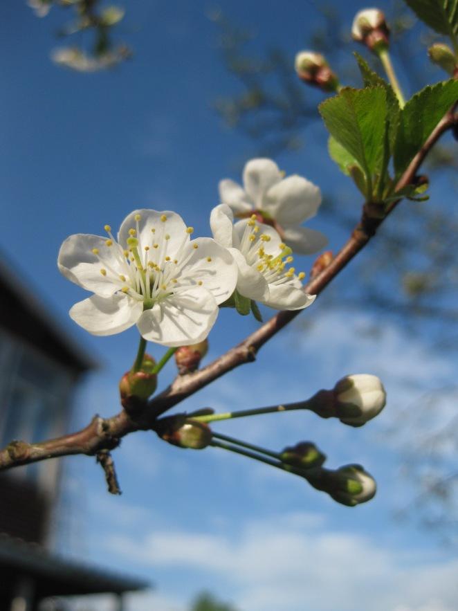 Spring at Dacha