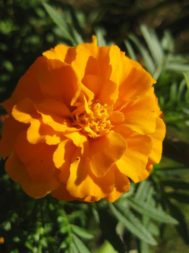 dacha flowers
