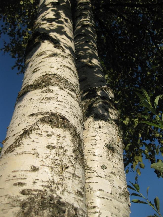 dacha trees