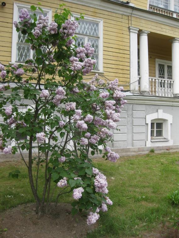Aptekarsky Island, St Petersburg