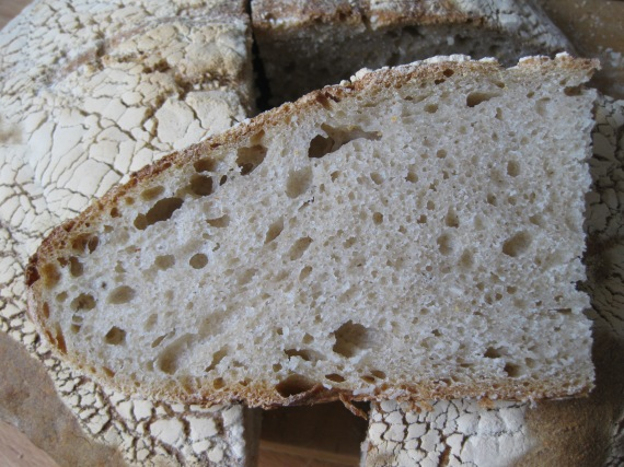 Pane Tipo Altamura from www.myitaliansmorgasbord.com