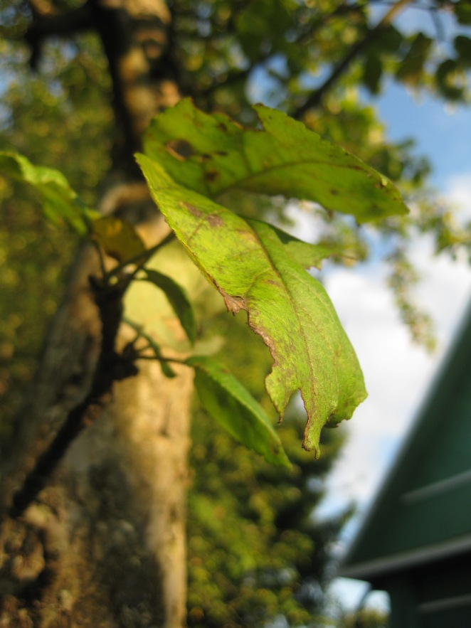 Dacha: From Summer to Autumn