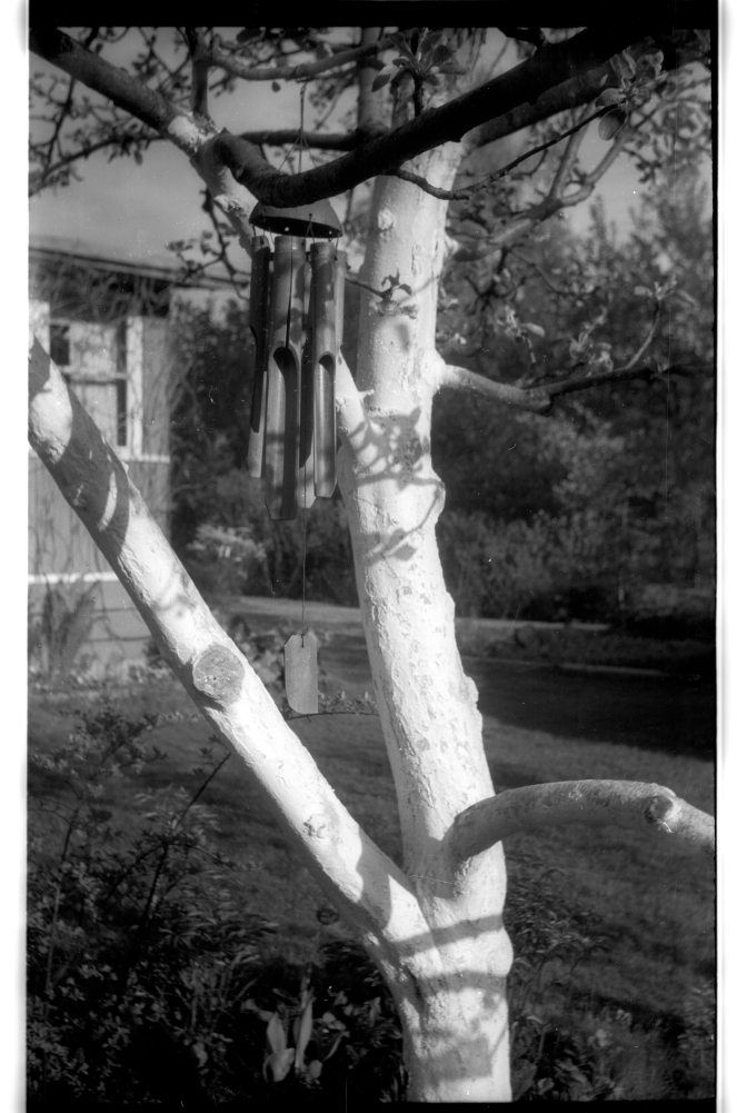 Experimenting with Black and White: Smena Film Camera