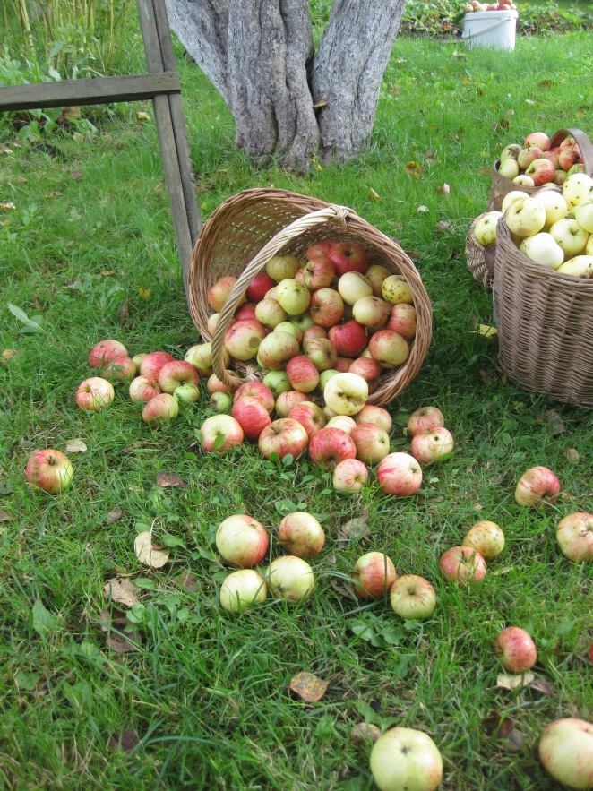 Apples. Again. A lot